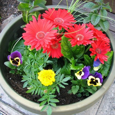 Planting Annuals in Containers