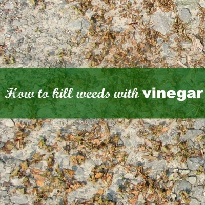How To Kill Weeds With Vinegar