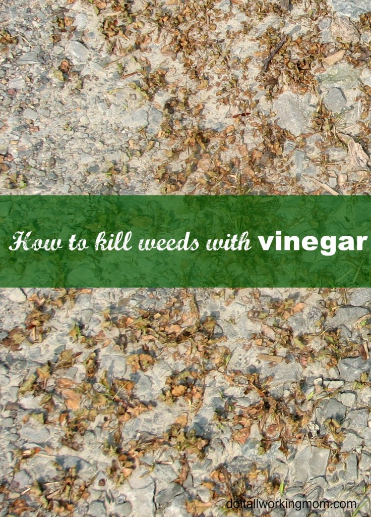 Do It All Working Mom - How to kill weeds with vinegar