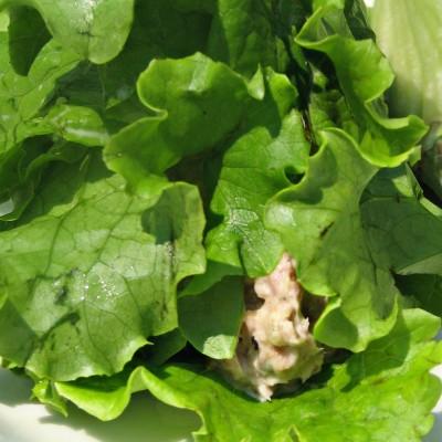 Tuna Salad Rolls